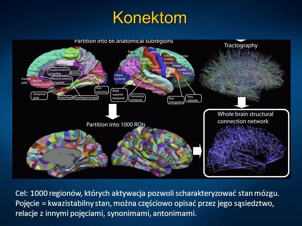 Konektom Cel: 1000 regionów, których aktywacja pozwoli scharakteryzować stan mózgu. Pojęcie = kwazistabilny stan, można częściowo opisać przez jego są