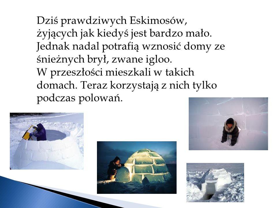 Dziś prawdziwych Eskimosów, żyjących jak kiedyś jest bardzo mało.