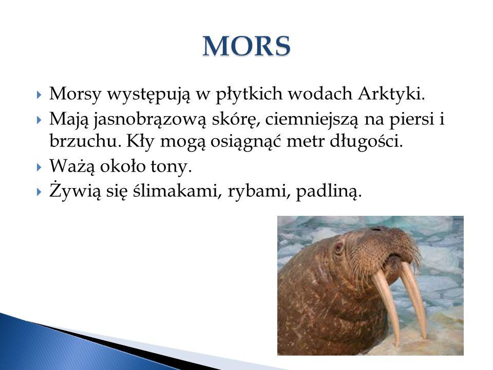  Morsy występują w płytkich wodach Arktyki.