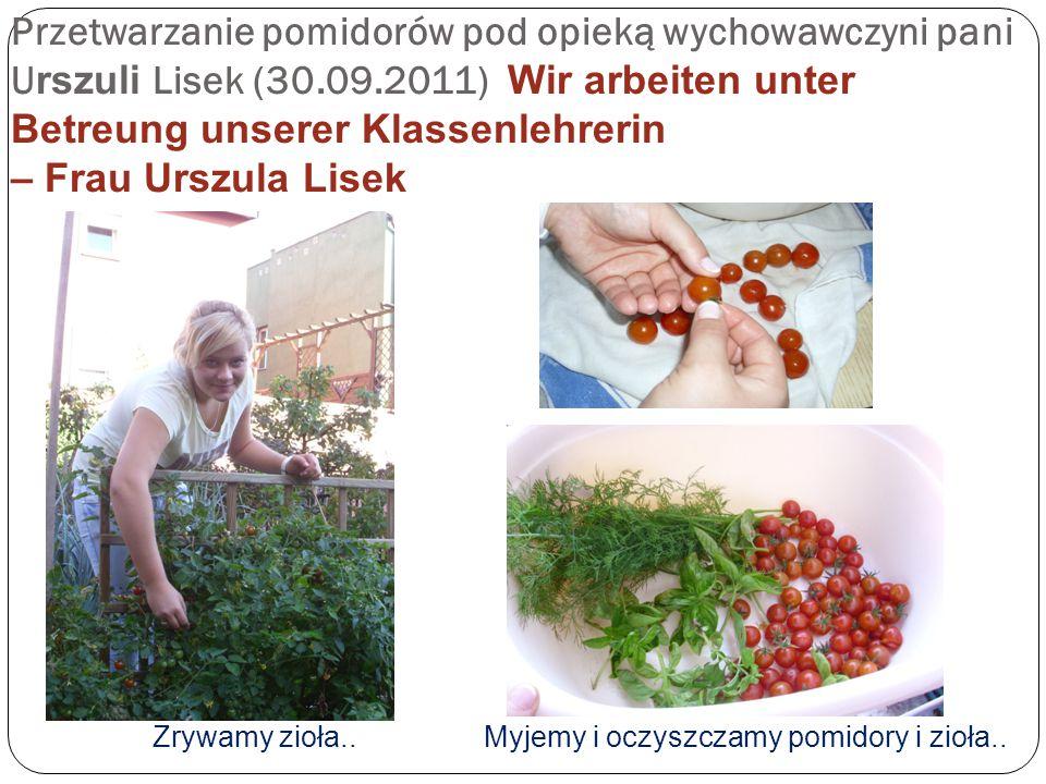 Przetwarzanie pomidorów pod opieką wychowawczyni pani U rszuli Lisek (30.09.2011) Wir arbeiten unter Betreung unserer Klassenlehrerin – Frau Urszula Lisek Zrywamy zioła..Myjemy i oczyszczamy pomidory i zioła..