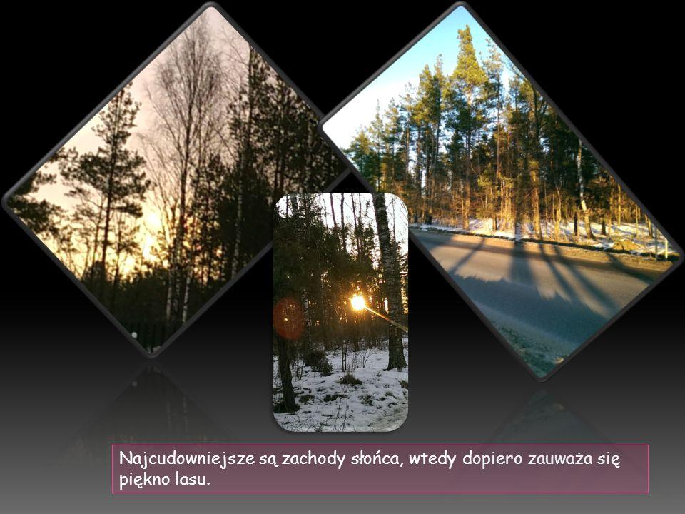 Najcudowniejsze są zachody słońca, wtedy dopiero zauważa się piękno lasu.