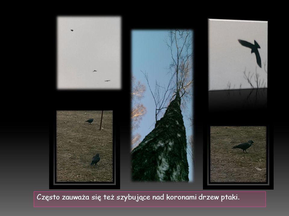 Często zauważa się też szybujące nad koronami drzew ptaki.