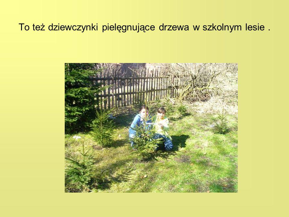 To też dziewczynki pielęgnujące drzewa w szkolnym lesie.