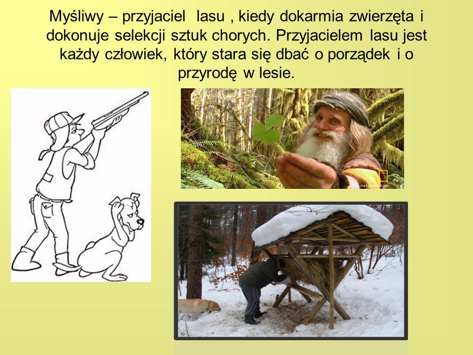 Myśliwy – przyjaciel lasu, kiedy dokarmia zwierzęta i dokonuje selekcji sztuk chorych. Przyjacielem lasu jest każdy człowiek, który stara się dbać o p