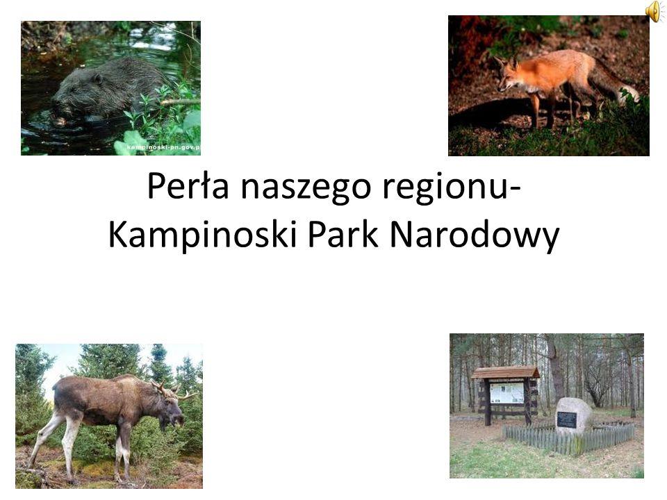 Perła naszego regionu- Kampinoski Park Narodowy