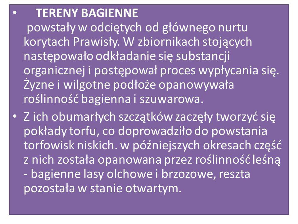 TERENY BAGIENNE powstały w odciętych od głównego nurtu korytach Prawisły. W zbiornikach stojących następowało odkładanie się substancji organicznej i