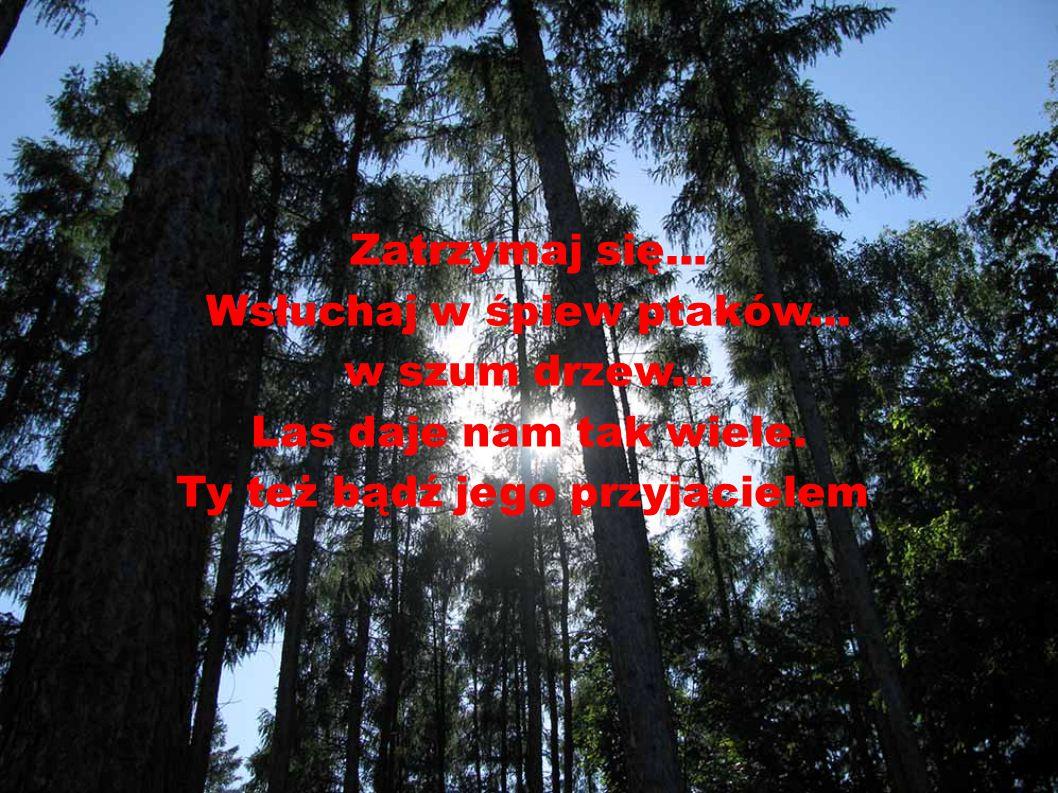 Las chroni przed wiatrem i hałasem. Zatrzymuje wodę, pochłania zanieczyszczenia z powietrza, produkuje tlen,daje schronienie zwierzętom.