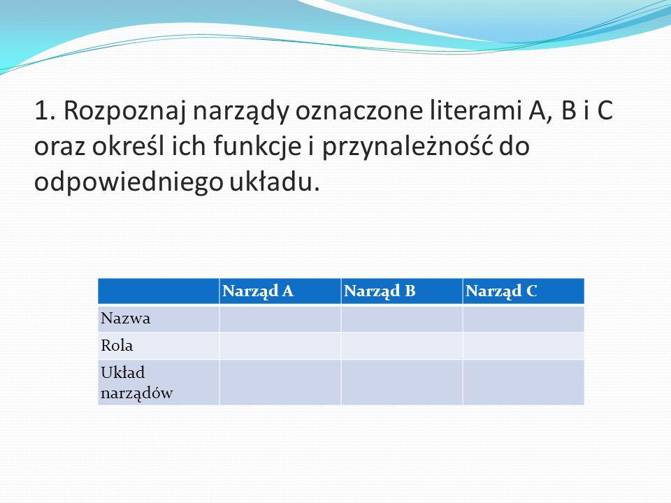 1. Rozpoznaj narządy oznaczone literami A, B i C oraz określ ich funkcje i przynależność do odpowiedniego układu. Narząd ANarząd BNarząd C Nazwa Rola