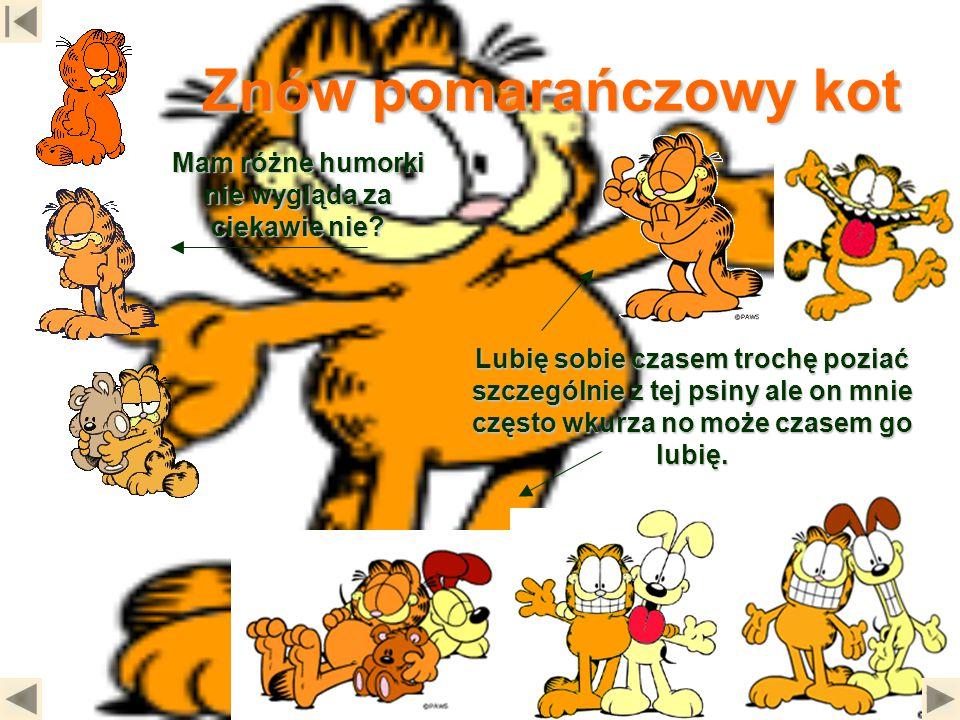 Znów pomarańczowy kot Mam różne humorki nie wygląda za ciekawie nie? Lubię sobie czasem trochę poziać szczególnie z tej psiny ale on mnie często wkurz