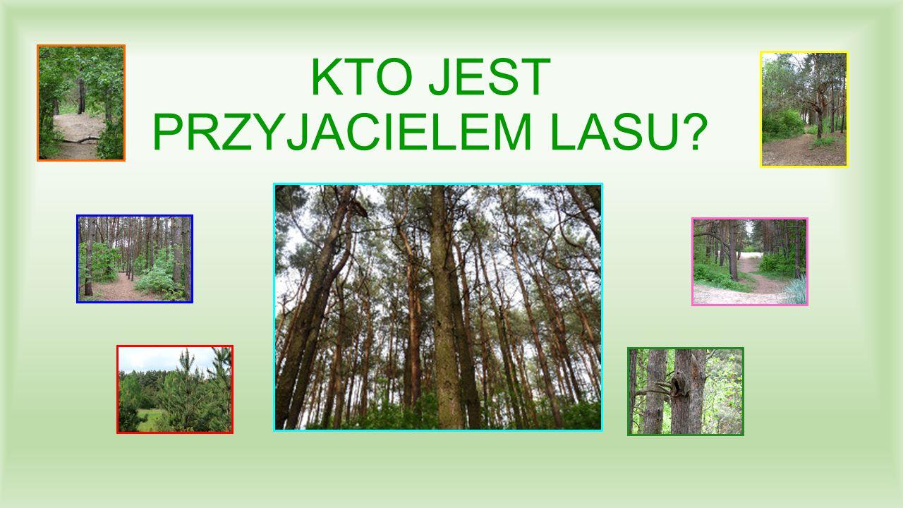 Na pewno przyjacielem lasu jest ten, kto go nie zaśmieca i dba o jego czystość.