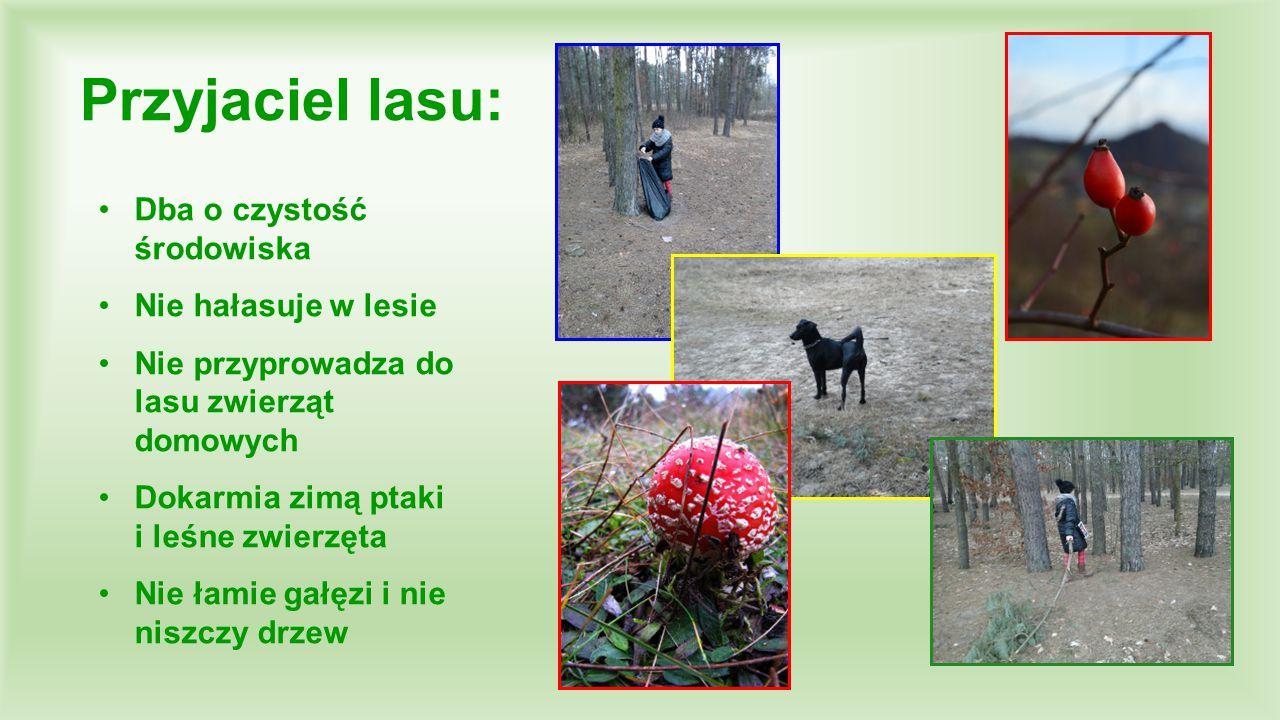 Przyjaciel lasu: Dba o czystość środowiska Nie hałasuje w lesie Nie przyprowadza do lasu zwierząt domowych Dokarmia zimą ptaki i leśne zwierzęta Nie ł