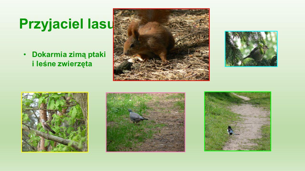 Dokarmia zimą ptaki i leśne zwierzęta Przyjaciel lasu: