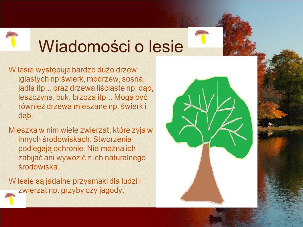 Wiadomości o lesie W lesie występuje bardzo dużo drzew iglastych np:świerk, modrzew, sosna, jadła itp... oraz drzewa liściaste np: dąb, leszczyna, buk
