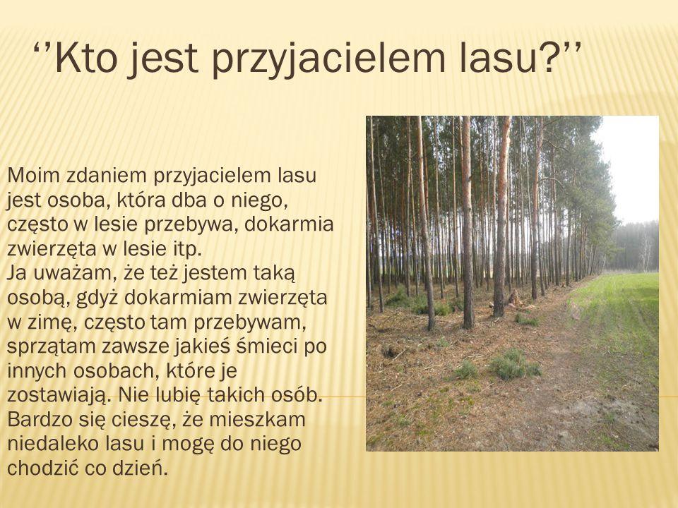 Moim zdaniem przyjacielem lasu jest osoba, która dba o niego, często w lesie przebywa, dokarmia zwierzęta w lesie itp.