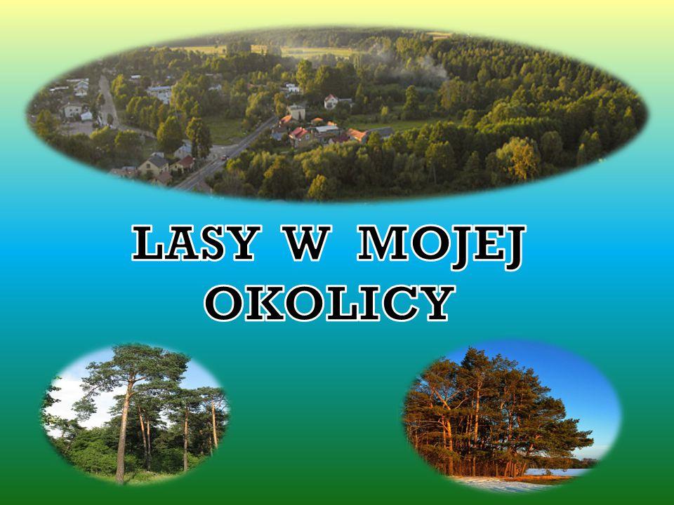 Lasy w granicach miasta zajmują powierzchnię 104 ha (11,4%).