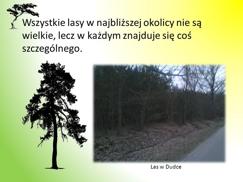 Wszystkie lasy w najbliższej okolicy nie są wielkie, lecz w każdym znajduje się coś szczególnego. Las w Dudce