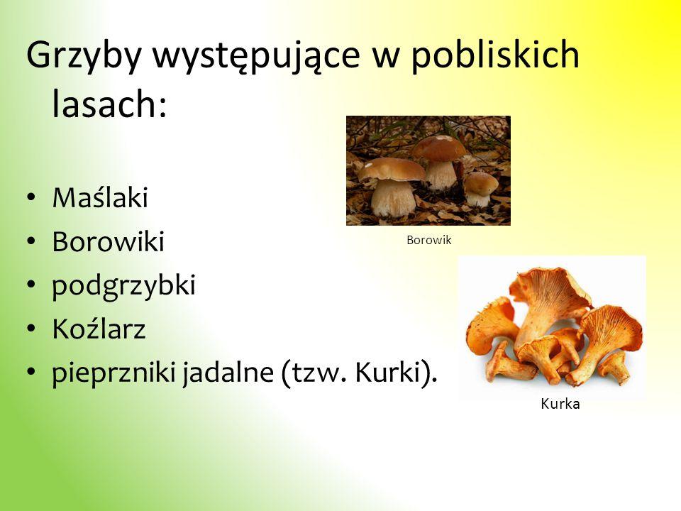 Grzyby występujące w pobliskich lasach: Maślaki Borowiki podgrzybki Koźlarz pieprzniki jadalne (tzw. Kurki). Borowik Kurka