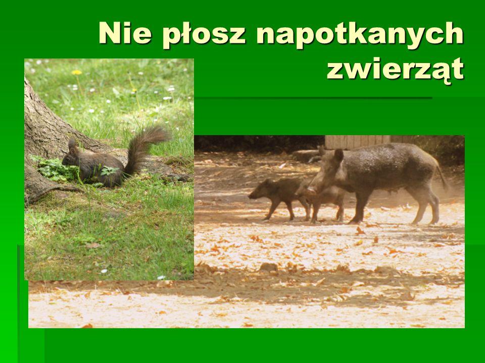 Nie płosz napotkanych zwierząt