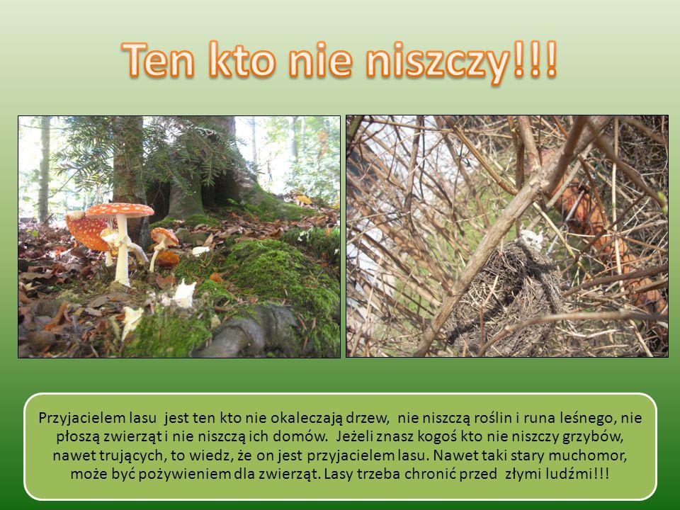 Przyjacielem lasu jest ten kto nie okaleczają drzew, nie niszczą roślin i runa leśnego, nie płoszą zwierząt i nie niszczą ich domów.