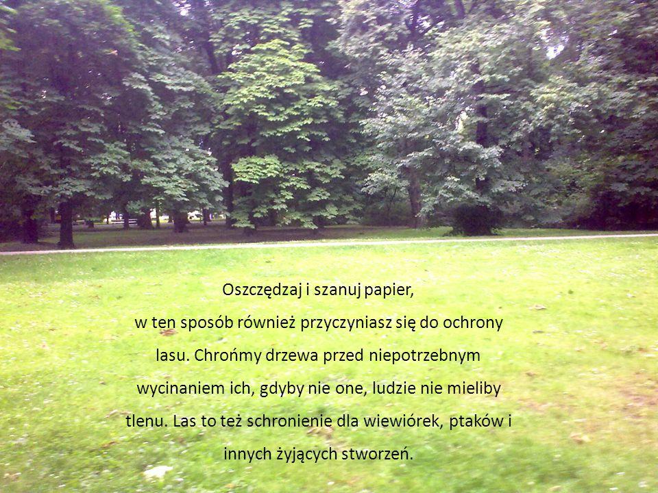 . Według mnie przyjacielem lasu możemy nazwać wszystkich tych, którzy w lesie nie śmiecą i nie hałasują. Nie należy zanieczyszczać lasów, ponieważ las