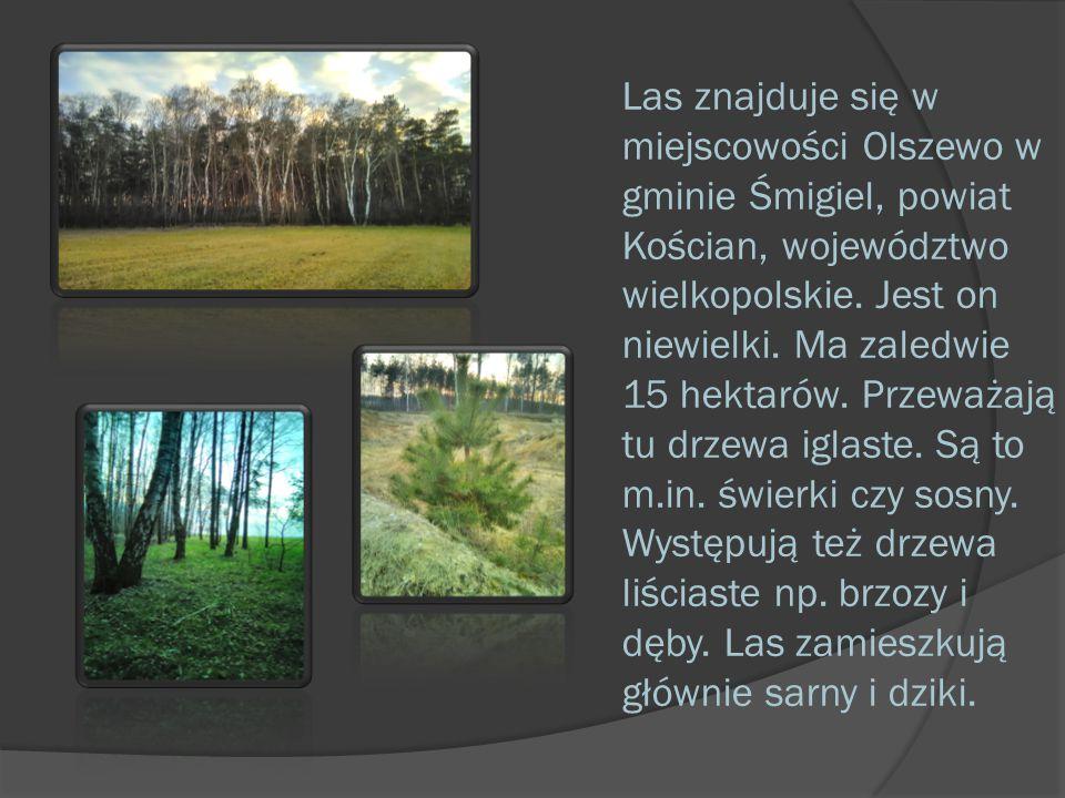Las znajduje się w miejscowości Olszewo w gminie Śmigiel, powiat Kościan, województwo wielkopolskie. Jest on niewielki. Ma zaledwie 15 hektarów. Przew