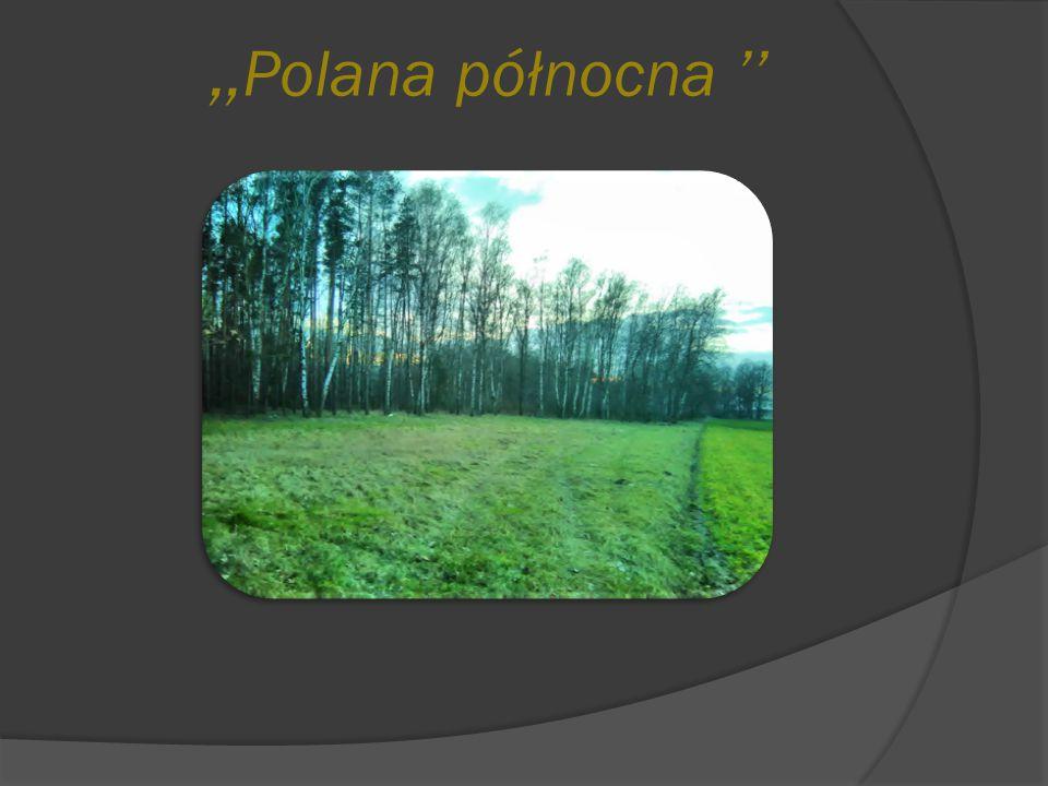 ,,Polana północna ''