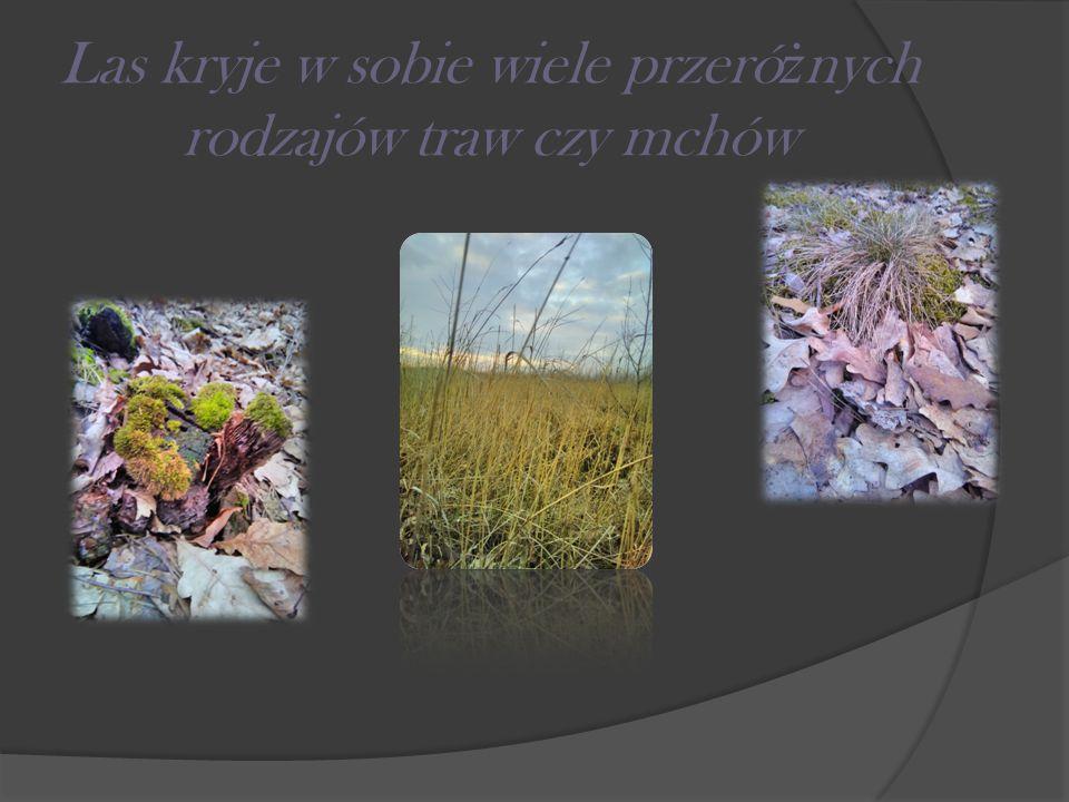 Las kryje w sobie wiele przeró ż nych rodzajów traw czy mchów