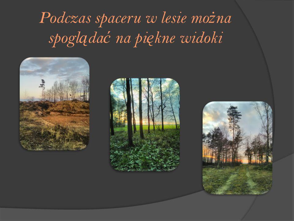 Podczas spaceru w lesie mo ż na spogl ą da ć na pi ę kne widoki