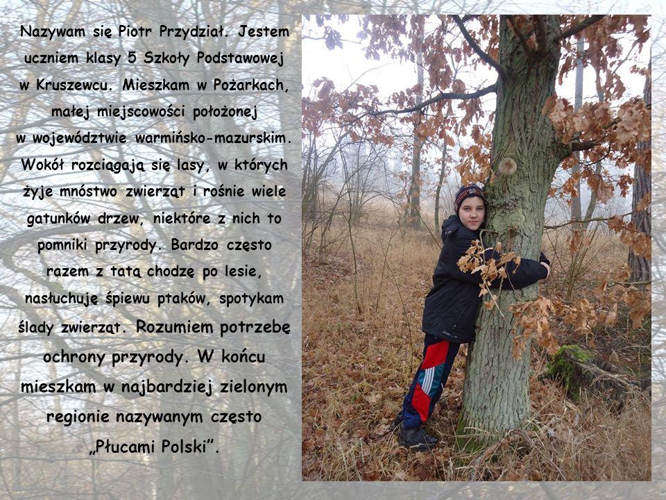 CZ Ł OWIEK Może też zostać przyjacielem lasu i podobnie jak zwierzęta pomagać utrzymać czystość, chronić przed niebezpieczeństwem, jakim jest pożar i
