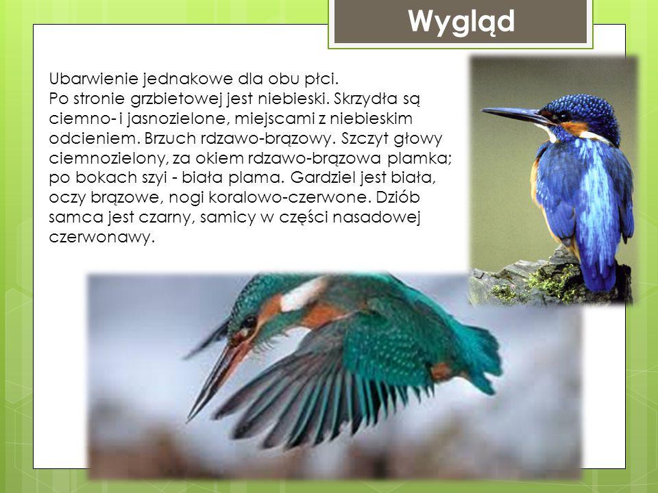 Występowanie W Polsce to nieliczny (niegdyś liczny) ptak lęgowy, spotyka się go na całym niżowym obszarze kraju. Zamieszkujący południową i środkową E
