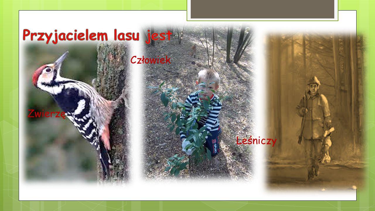 Sprząta las Sadzi nowe drzewa Nie śmieci Dokarmia zwierzęta
