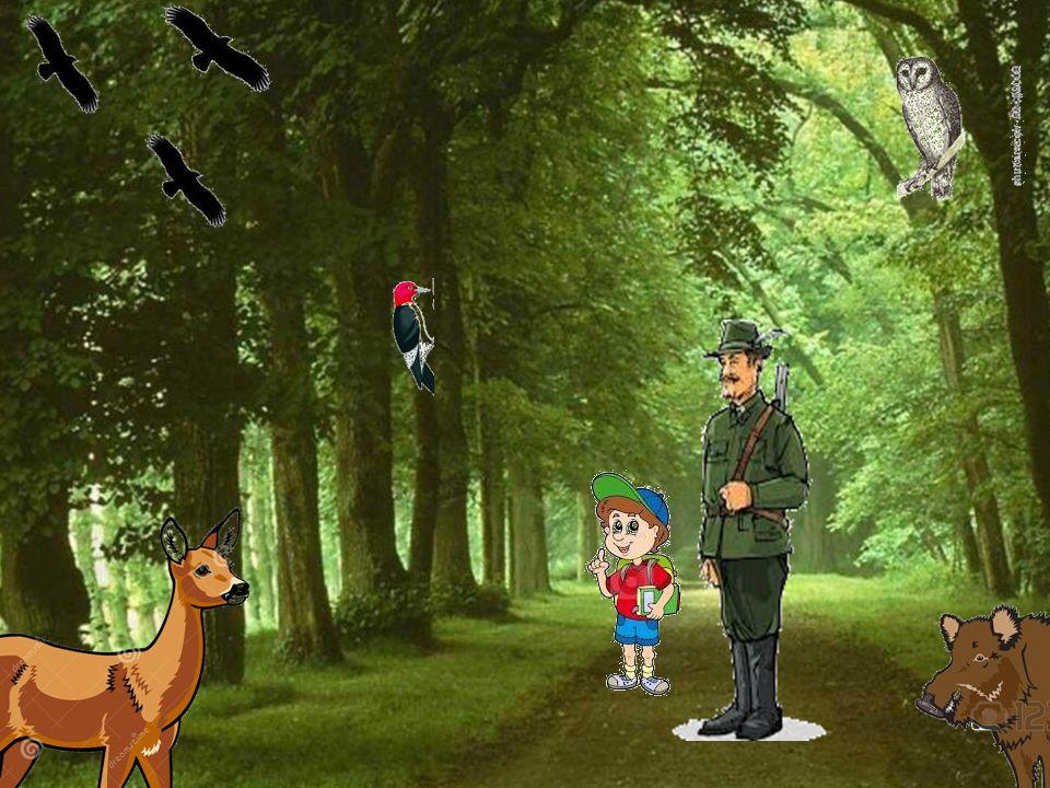 Aby las przeżył nas!!! Nie zanieczyszczać! Zachować ciszę! Ostrożnie z ogniem! Dbać o zwierzęta!