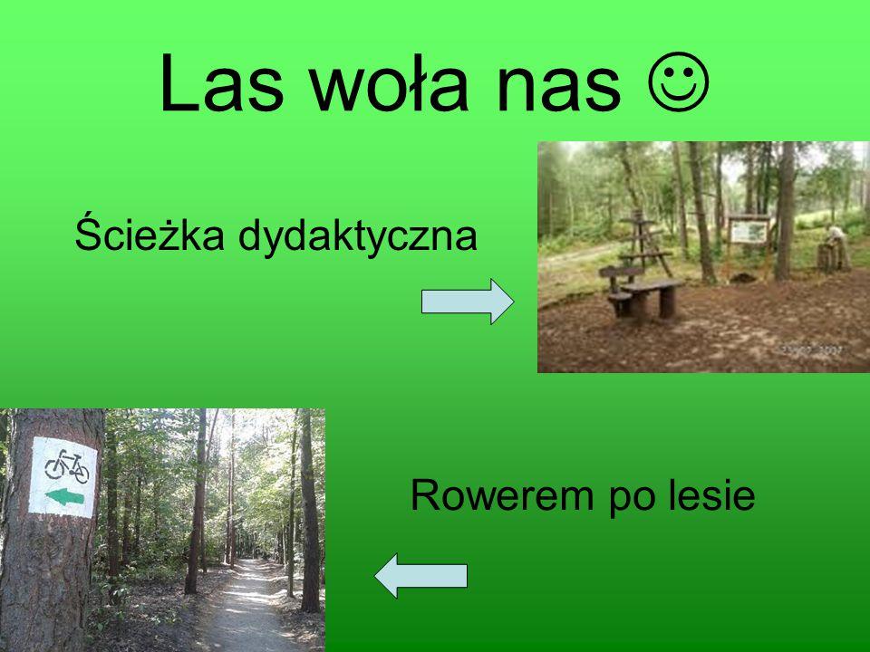 Las woła nas Ścieżka dydaktyczna Rowerem po lesie