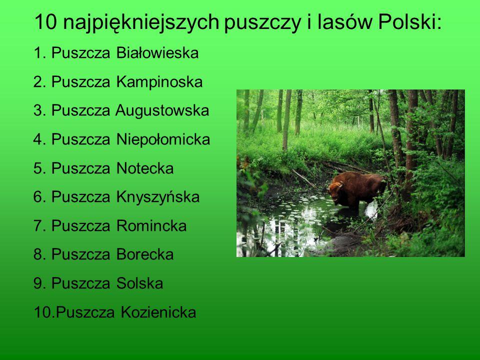 10 najpiękniejszych puszczy i lasów Polski: 1.Puszcza Białowieska 2.Puszcza Kampinoska 3.Puszcza Augustowska 4.Puszcza Niepołomicka 5.Puszcza Notecka