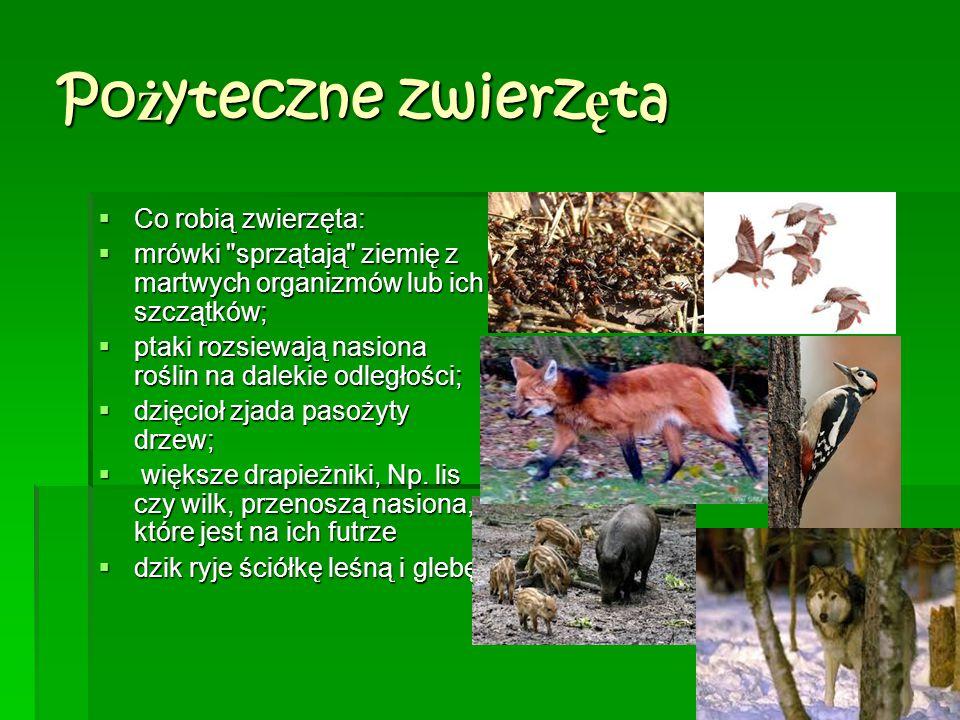 Po ż yteczne zwierz ę ta  Co robią zwierzęta:  mrówki