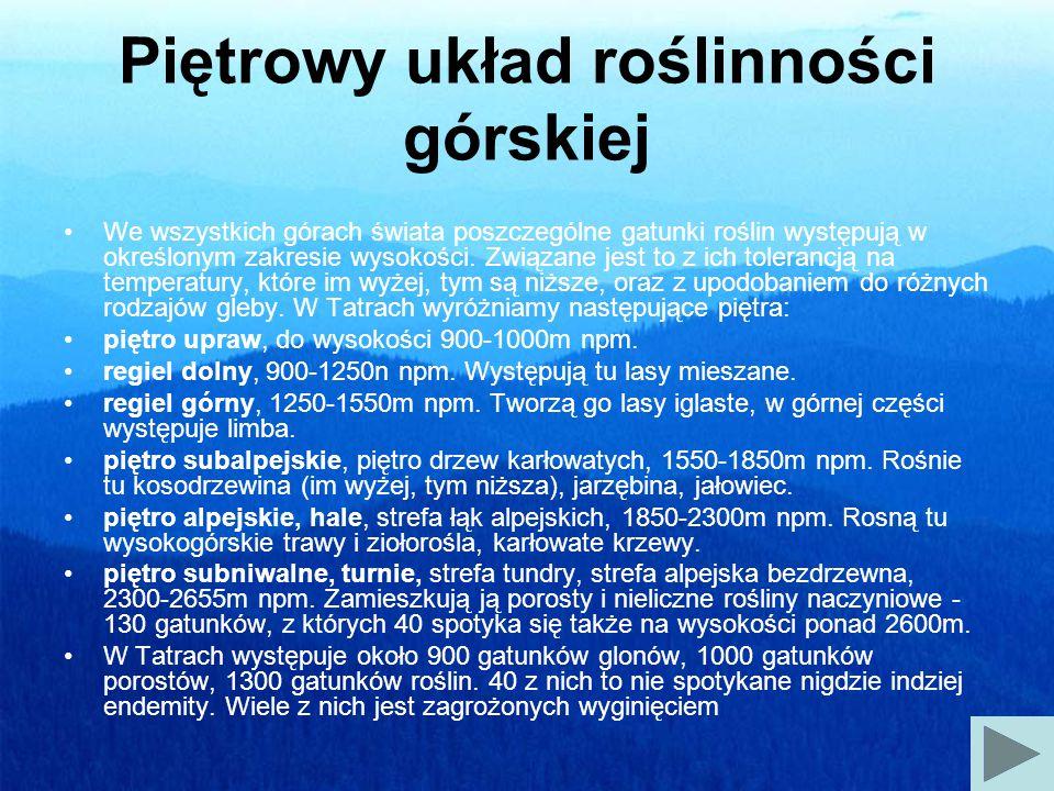 Goryczka kropkowana - Gentiana punctata Wysokość do 80 cm.