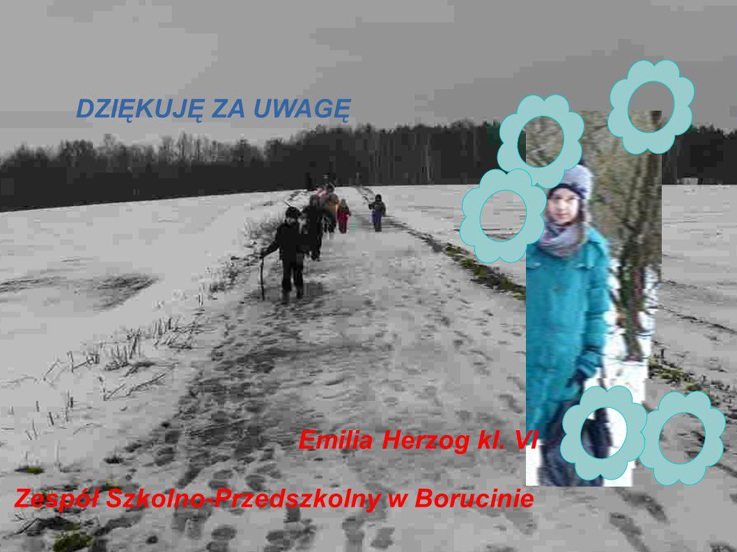 DZIĘKUJĘ ZA UWAGĘ Emilia Herzog kl. VI Zespół Szkolno-Przedszkolny w Borucinie