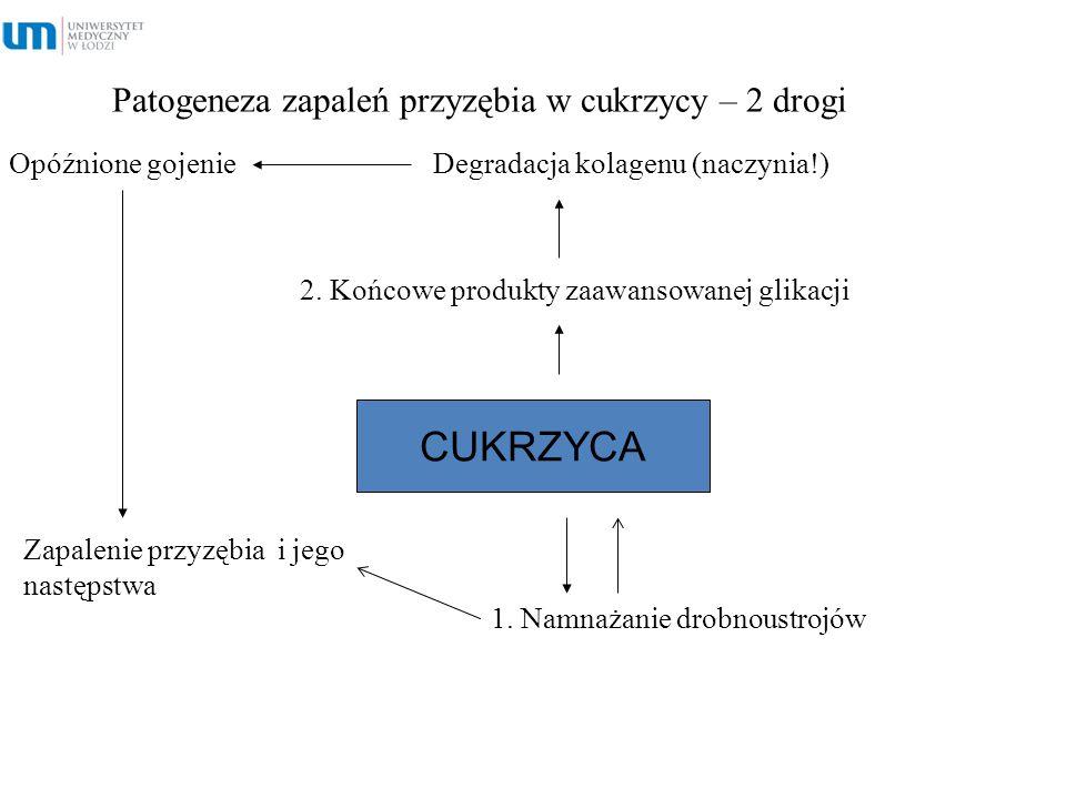 Patogeneza zapaleń przyzębia w cukrzycy – 2 drogi Opóźnione gojenie Degradacja kolagenu (naczynia!) CUKRZYCA 1. Namnażanie drobnoustrojów 2. Końcowe p