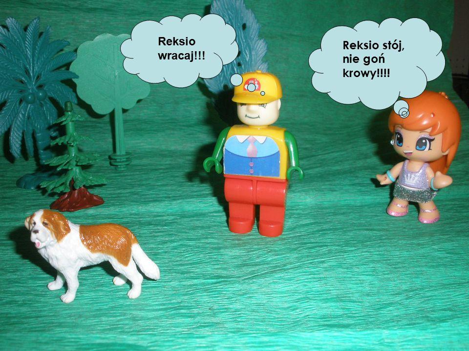 Reksio stój, nie goń krowy!!!! Reksio wracaj!!!