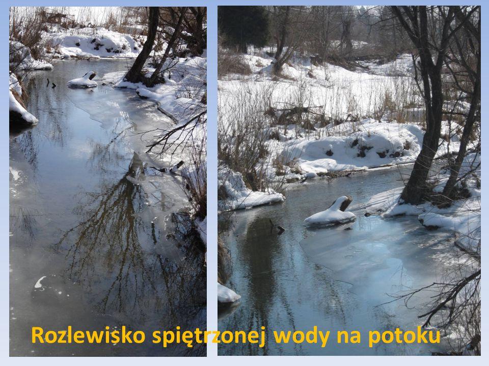 Rozlewisko spiętrzonej wody na potoku