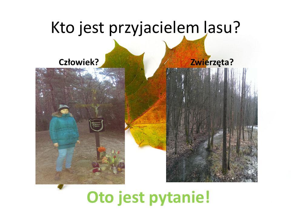 Kto jest przyjacielem lasu? Człowiek?Zwierzęta? Oto jest pytanie!