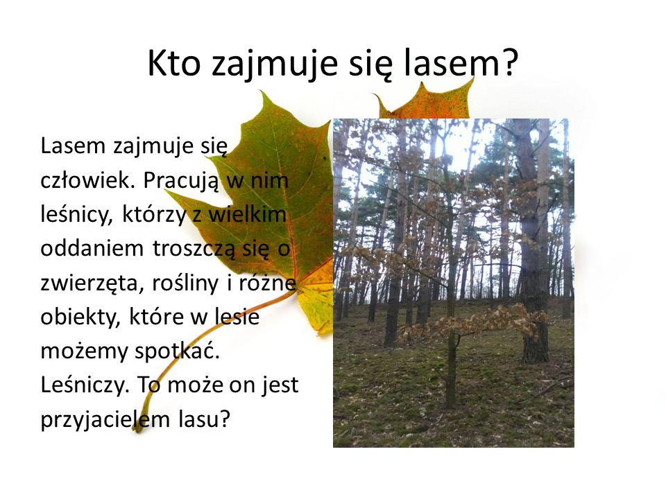Kto zajmuje się lasem? Lasem zajmuje się człowiek. Pracują w nim leśnicy, którzy z wielkim oddaniem troszczą się o zwierzęta, rośliny i różne obiekty,
