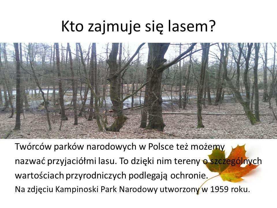 Kto zajmuje się lasem? Twórców parków narodowych w Polsce też możemy nazwać przyjaciółmi lasu. To dzięki nim tereny o szczególnych wartościach przyrod