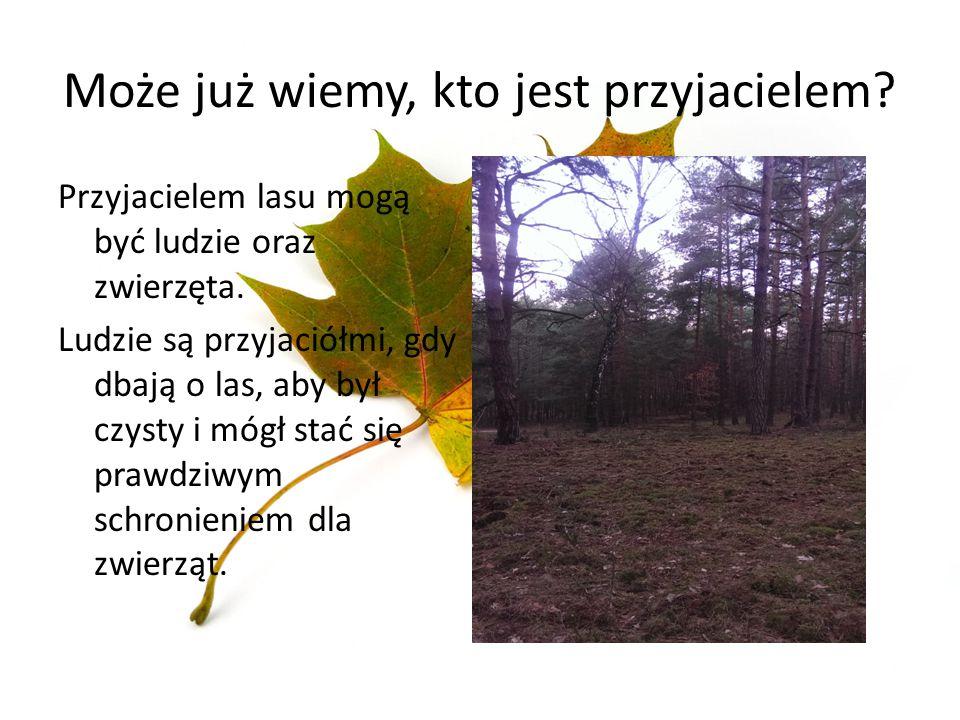 Może już wiemy, kto jest przyjacielem? Przyjacielem lasu mogą być ludzie oraz zwierzęta. Ludzie są przyjaciółmi, gdy dbają o las, aby był czysty i móg