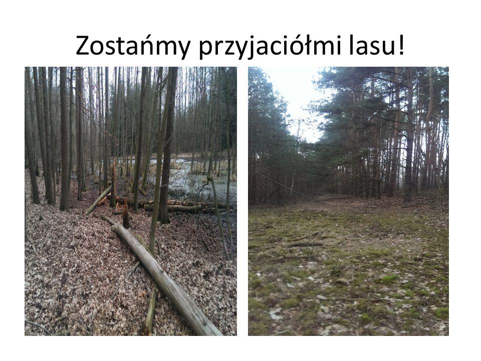 Kilka zasad dla przyjaciela lasu 1.Las pozostaw czysty i niezaśmiecony.