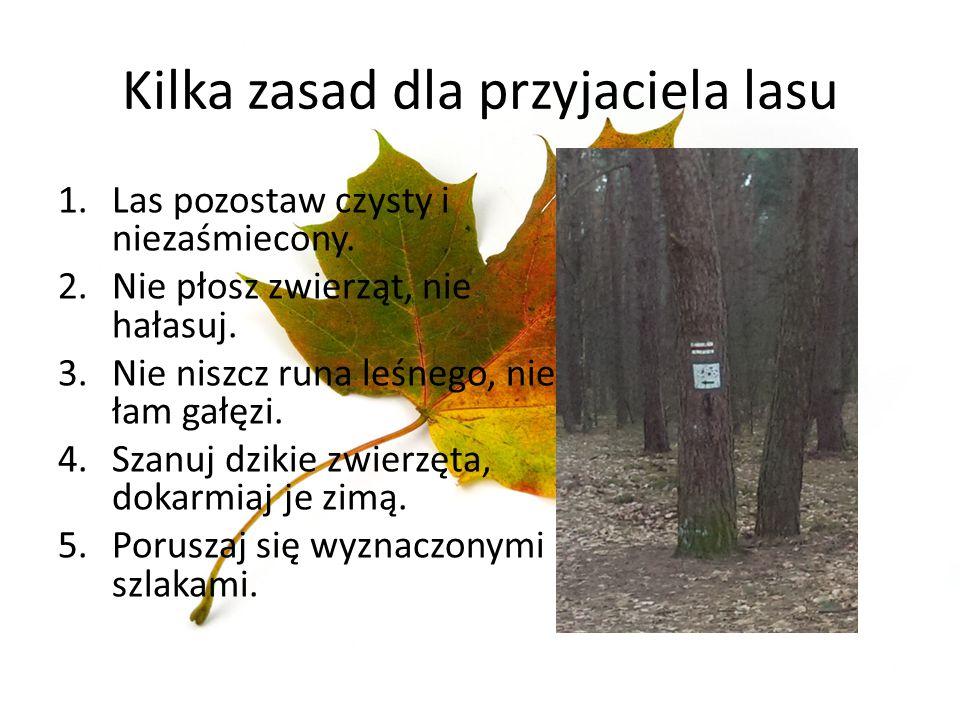 Kilka zasad dla przyjaciela lasu 1.Las pozostaw czysty i niezaśmiecony. 2.Nie płosz zwierząt, nie hałasuj. 3.Nie niszcz runa leśnego, nie łam gałęzi.