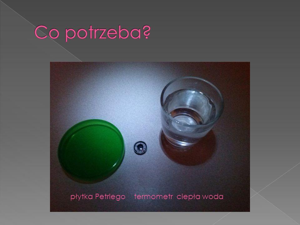 płytka Petriego termometr ciepła woda