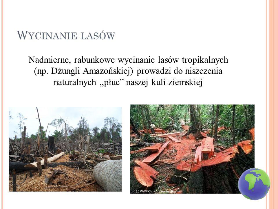 W YCINANIE LASÓW Nadmierne, rabunkowe wycinanie lasów tropikalnych (np.