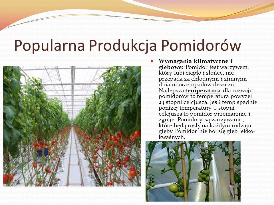 Popularna Produkcja Pomidorów Wymagania klimatyczne i glebowe: Pomidor jest warzywem, który lubi ciepło i słońce, nie przepada za chłodnymi i zimnymi dniami oraz opadów deszczu.