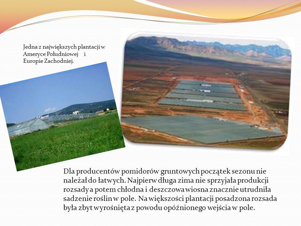 Jedna z największych plantacji w Ameryce Południowej i Europie Zachodniej.